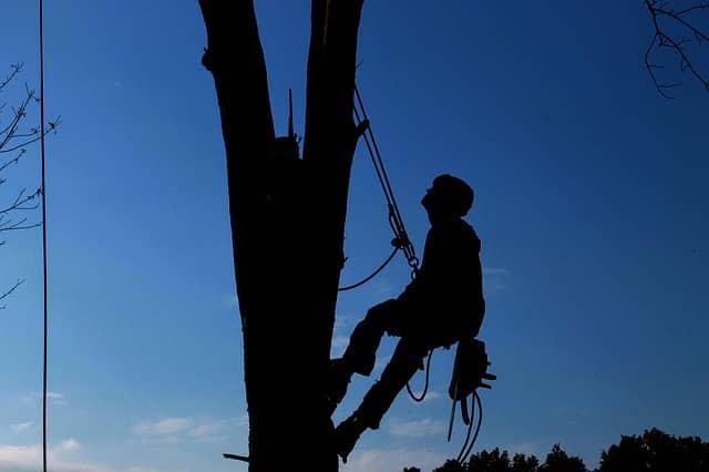 Baumpflege Wirmachensschee